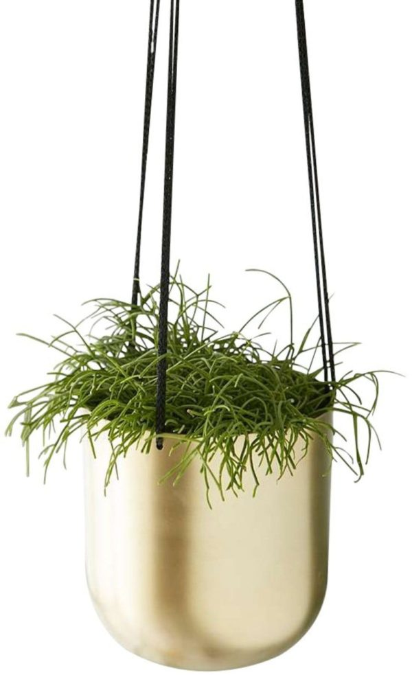 Brass Pot for Plant