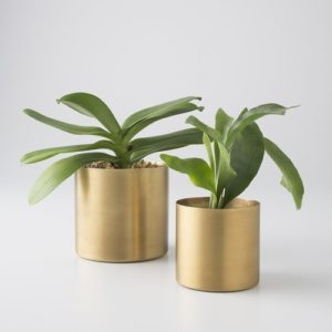 Brass pot for Plants in Matt finish