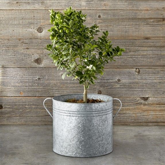 Galvanized Planter Bucket